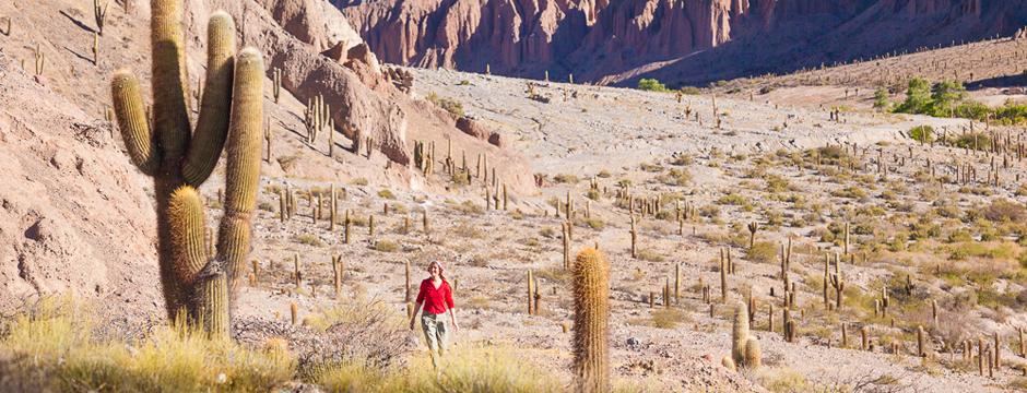 Norte Argentino e Salinas Grandes - O Deserto de Sal