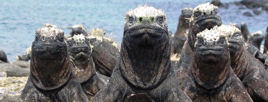 Galápagos Ilhas do Norte com Iate La Pinta