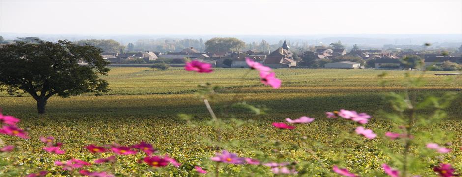 Borgonha - Beaune