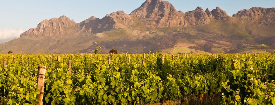 África do Sul - Rota dos Vinhos - sem aéreo