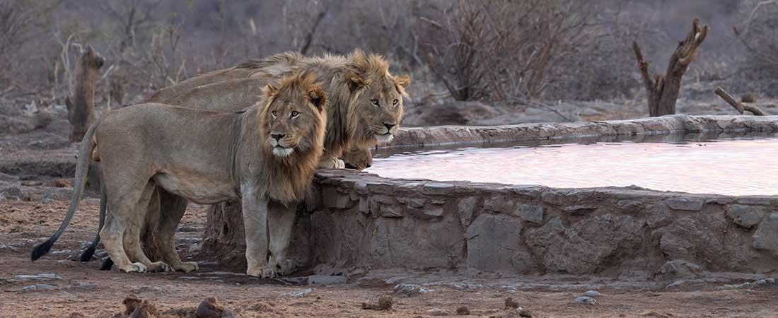 madikwe-safari2