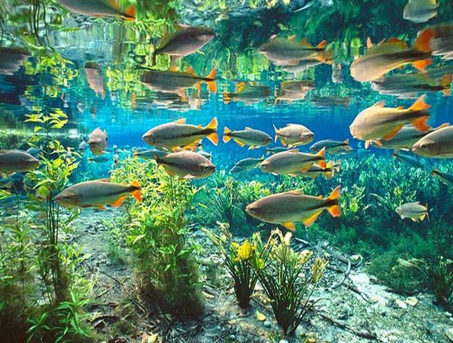 Aquario Natural_byo