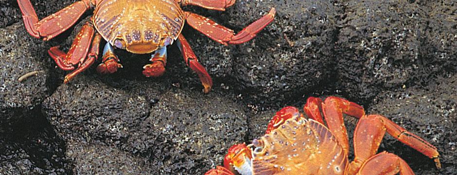 Galápagos Ilhas do Oeste com Iate La Pinta